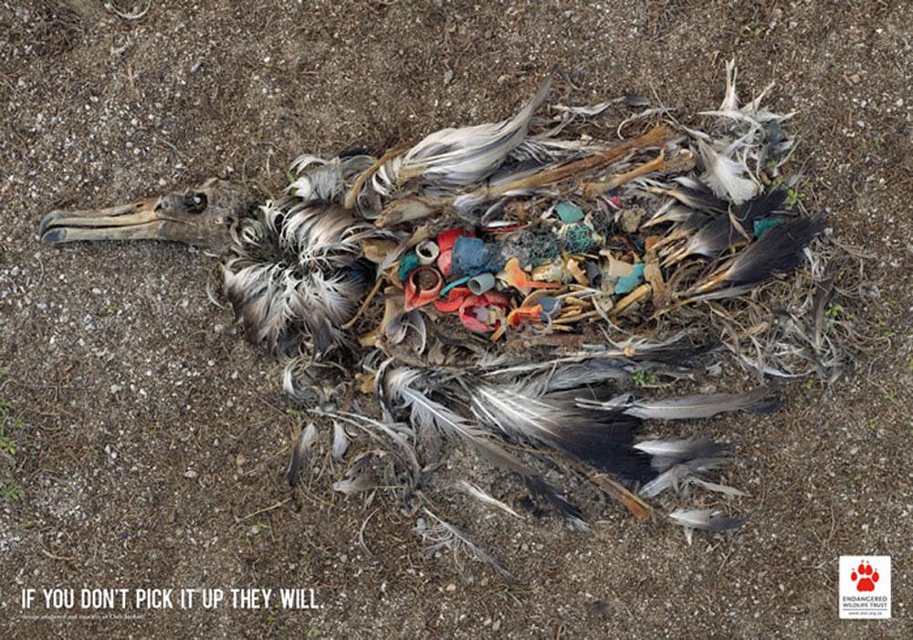 濒危野生动植物广告案例|广告平面案例|广告案例分析