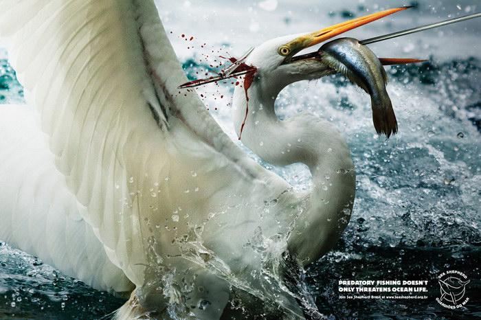 海洋守护者公益广告