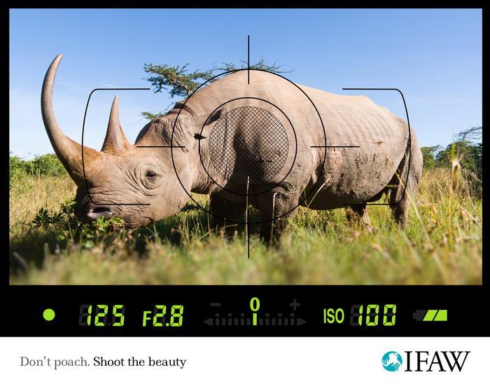 国际爱护动物基金会