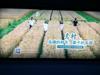 上海户外广告(2017-8-22)